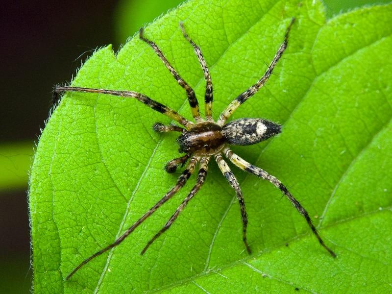 В картинках все виды пауков